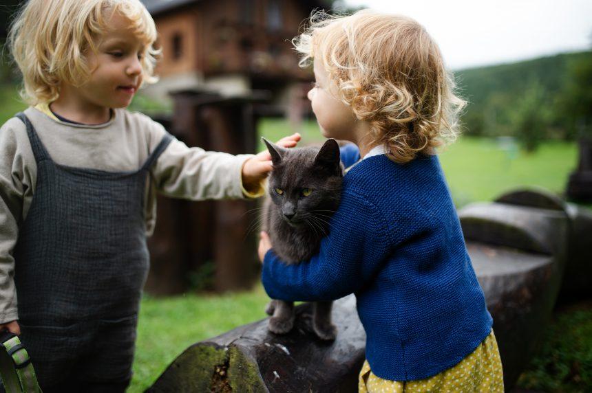 Kedi Korkusu (Kedi Fobisi-Ailurofobi) Nasıl Aşılır?